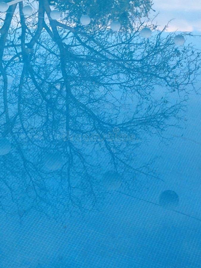 Riflessione blu dell'albero immagine stock