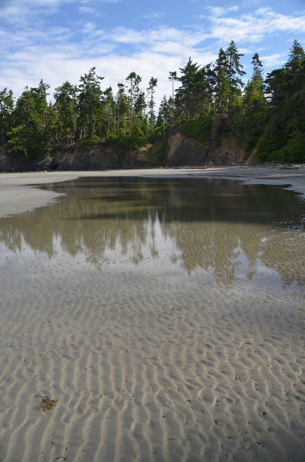 Riflessione degli alberi in acqua sulla spiaggia fotografia stock libera da diritti