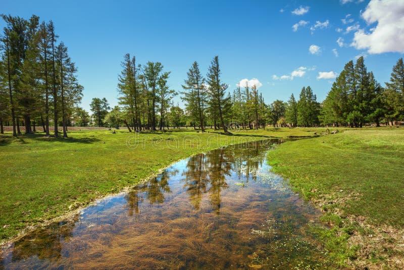 Riflessione degli alberi in The Creek fotografia stock