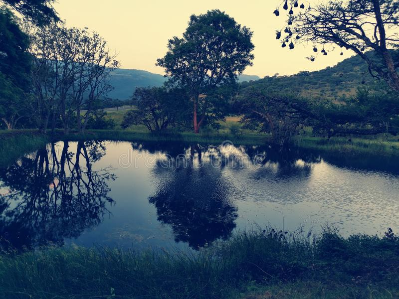 Riflessione degli alberi di tramonto dell'acqua su verde dell'acqua fotografia stock libera da diritti