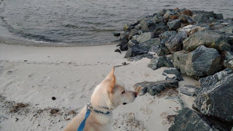 Riflessione del cane fotografia stock
