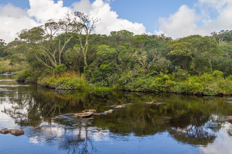 Riflessione del fiume e della foresta del canyon immagine stock libera da diritti