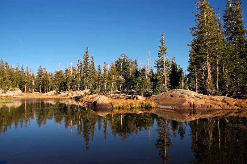 Riflessione del lago forest fotografia stock libera da diritti