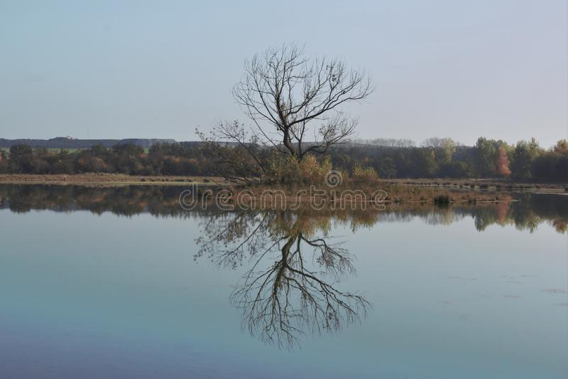 Riflessione del trea in acqua vicino al heide Tilburg del ter di Huis fotografia stock libera da diritti