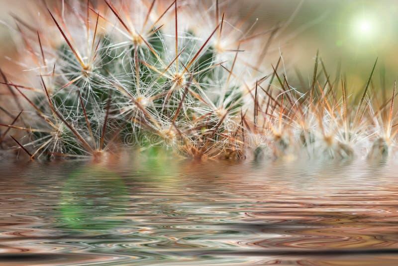 Riflessione dell'acqua degli aghi del cactus fotografie stock