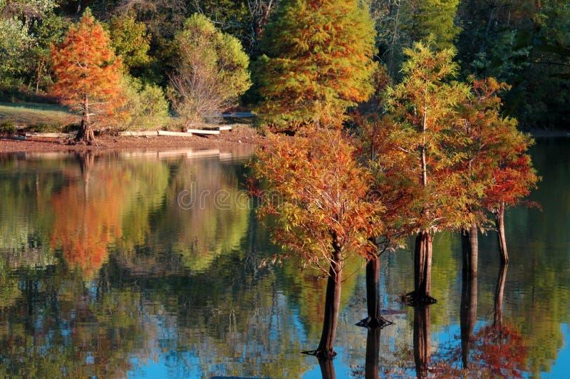 Riflessione dell'acqua degli alberi di Cypress di caduta fotografia stock