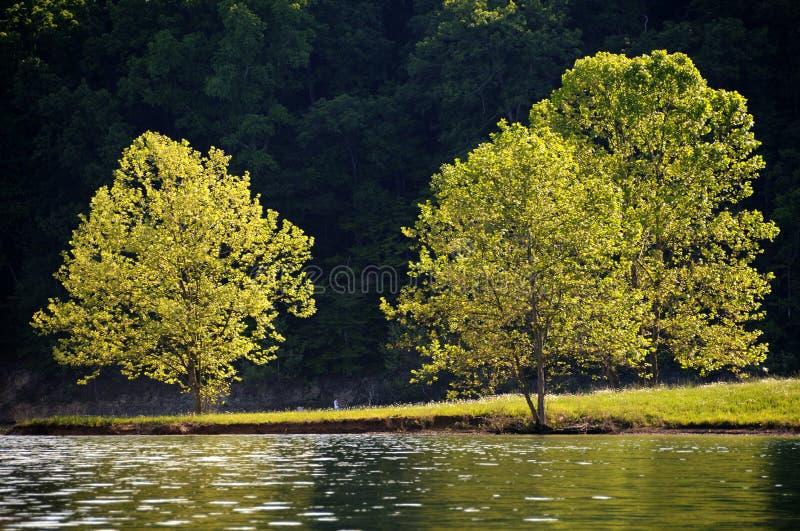 Riflessione dell'albero immagine stock