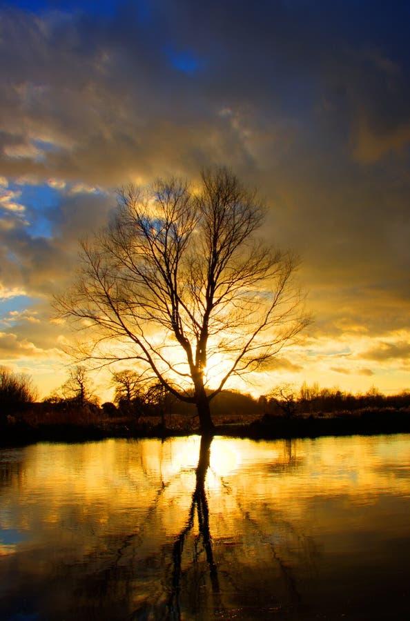 Riflessione dell'albero di tramonto sul fiume immagine stock libera da diritti