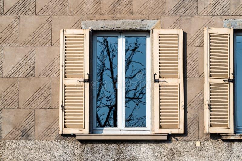 riflessione dell'albero nudo in finestra domestica in primavera fotografia stock libera da diritti
