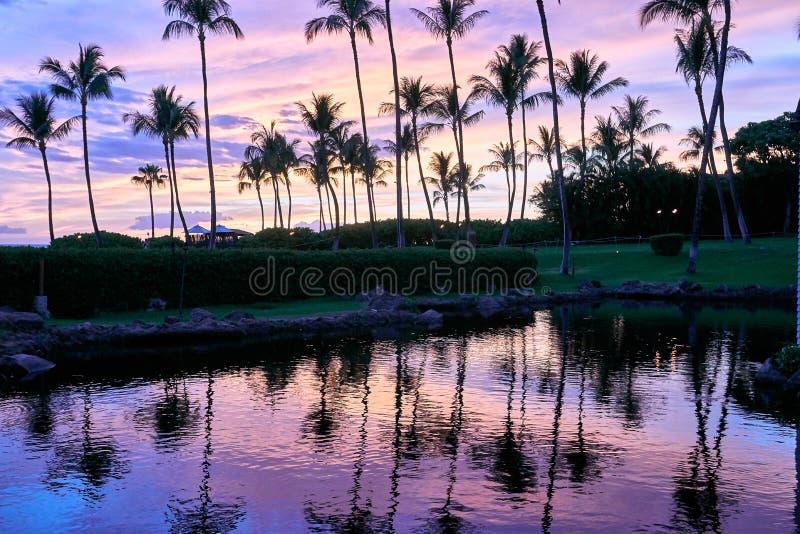 Riflessione delle palme su uno stagno durante il tramonto ad una località di soggiorno in Maui, Hawai immagini stock