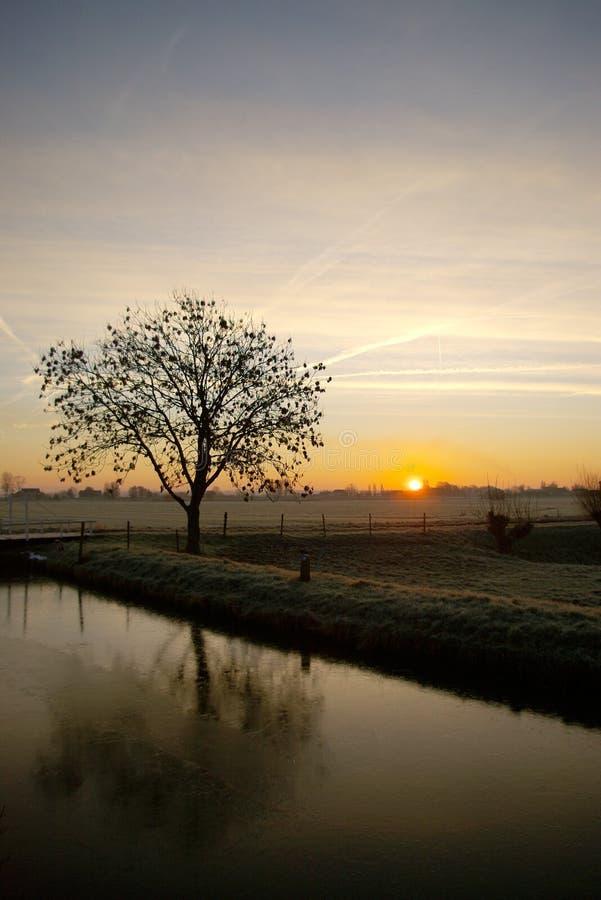 Riflessione di alba dell'albero immagini stock