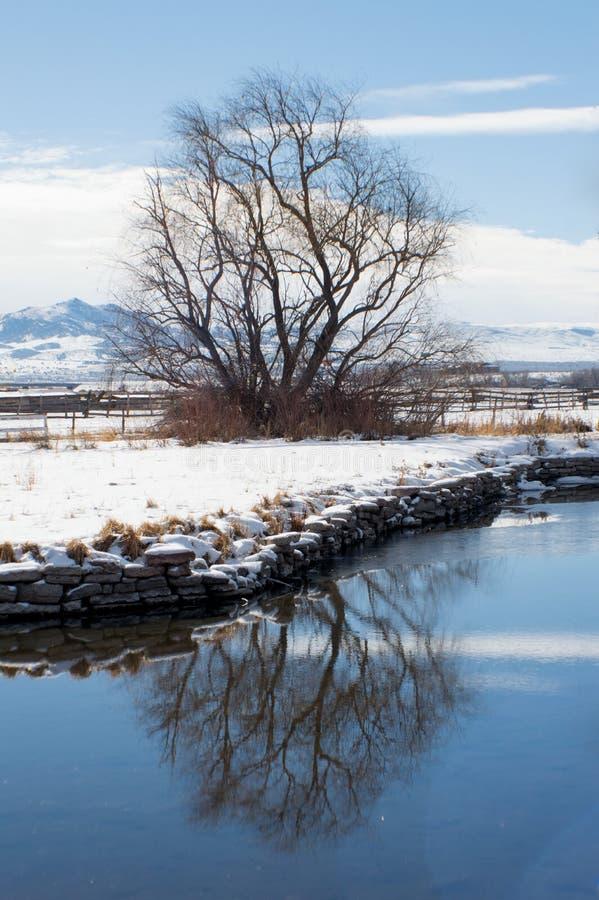 Riflessione di inverno fotografia stock libera da diritti