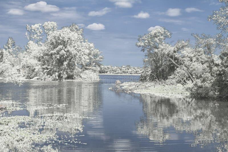 Riflessione di inverno sul lago immagine stock