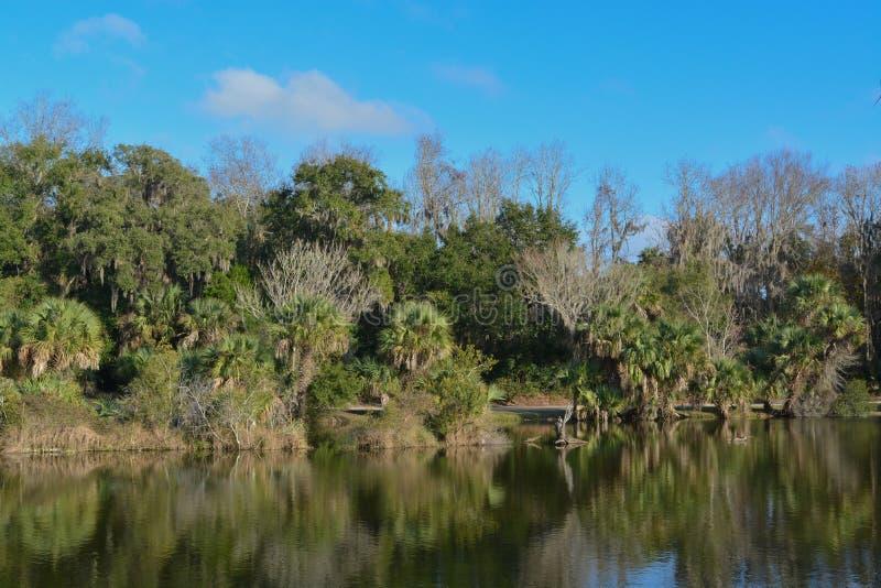 Riflessione di litorale a Kathryn Abbey Hanna Park, la contea di Duval, Jacksonville, Florida fotografia stock libera da diritti