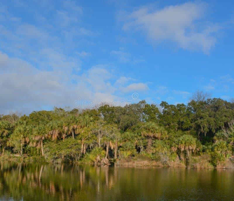 Riflessione di litorale a Kathryn Abbey Hanna Park, la contea di Duval, Jacksonville, Florida fotografie stock libere da diritti