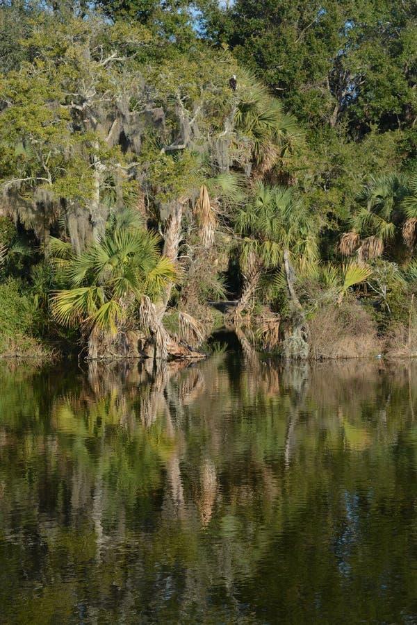 Riflessione di litorale a Kathryn Abbey Hanna Park, la contea di Duval, Jacksonville, Florida immagini stock libere da diritti