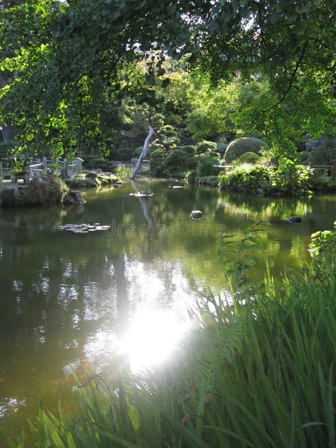 Riflessione di Sun dello stagno in giardino verde fotografia stock libera da diritti