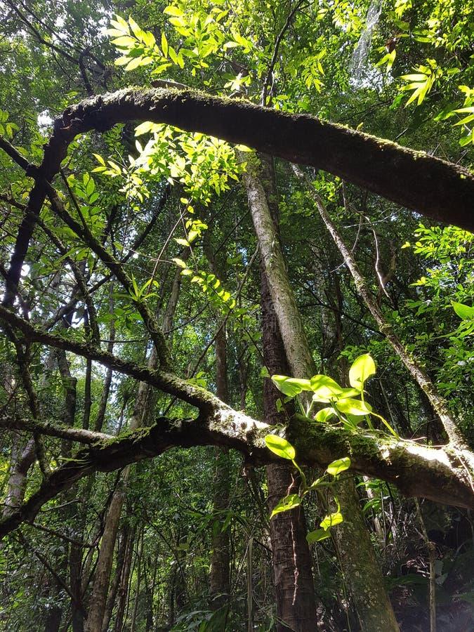 Riflessione leggera sulle foglie fotografia stock