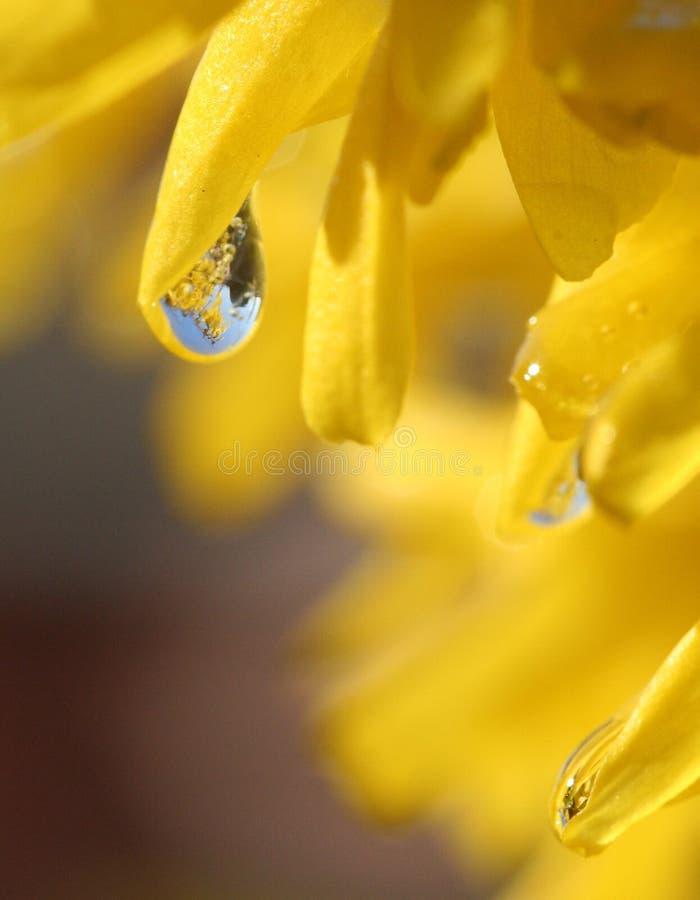 Riflessione nella goccia dell'acqua fotografia stock libera da diritti