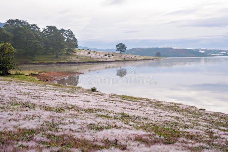 Riflessione sola del pino sul lago all'alba con il fondo rosa della collina dell'erba immagini stock