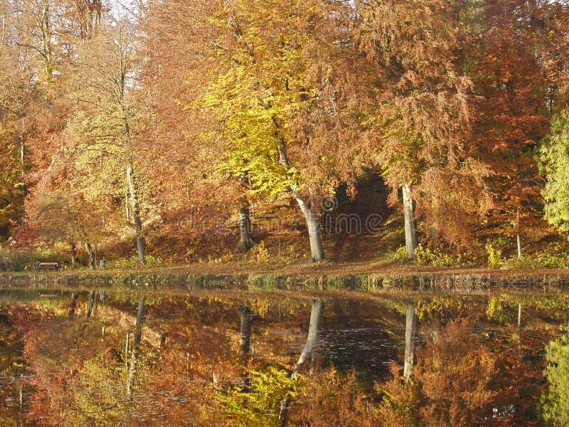 Riflessione su un lago in autunno in Danimarca immagine stock libera da diritti