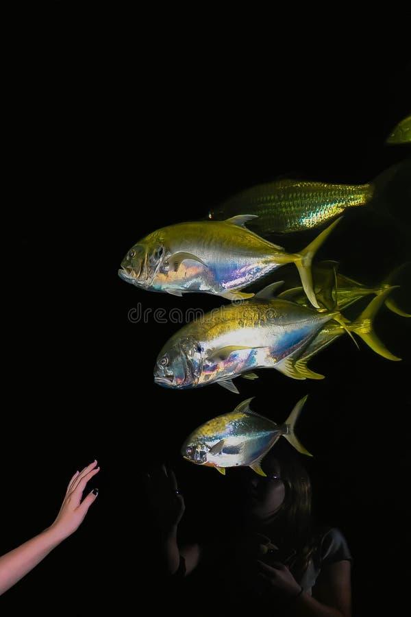 Riflessione in un acquario fotografia stock libera da diritti