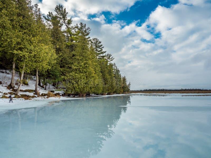 Riflessioni Cedar Forest Beside Frozen Marsh di disgelo di inverno fotografia stock libera da diritti