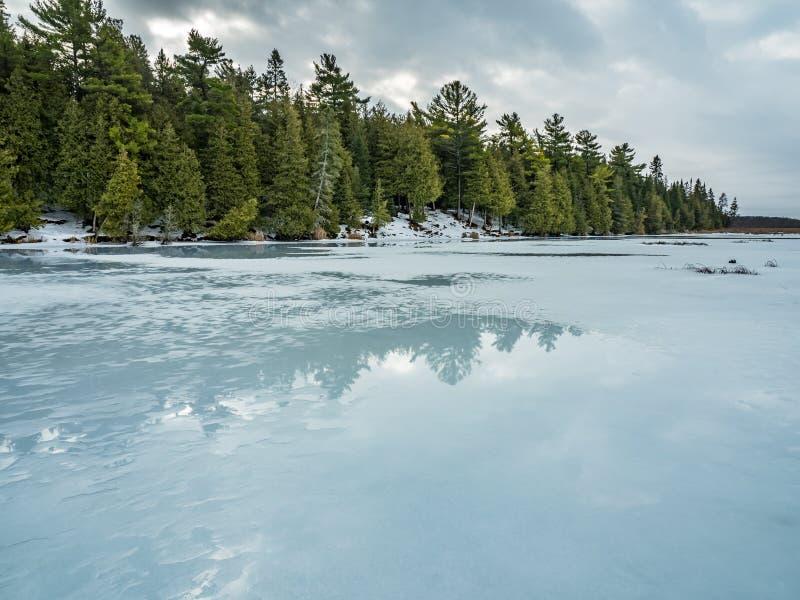 Riflessioni 3 Cedar Forest Beside Frozen Marsh di disgelo di inverno fotografia stock