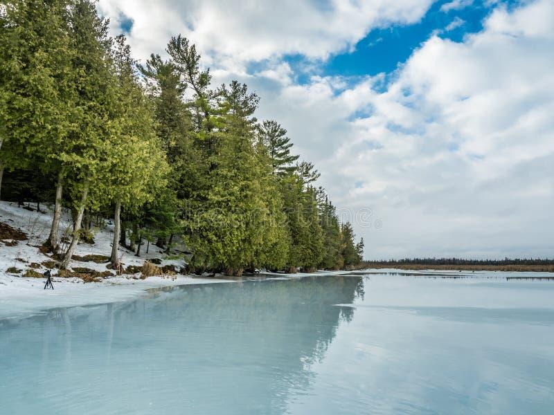 Riflessioni 9 Cedar Forest Beside Frozen Marsh di disgelo di inverno fotografia stock libera da diritti