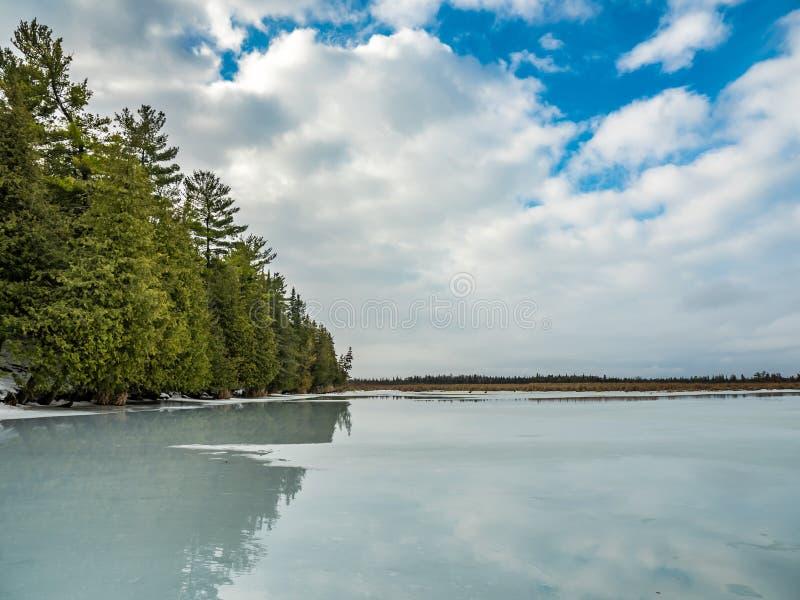 Riflessioni 10 Cedar Forest Beside Frozen Marsh di disgelo di inverno immagine stock libera da diritti