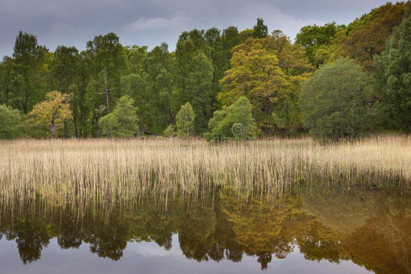 Riflessioni degli alberi sul lago pityoulish fotografia stock libera da diritti