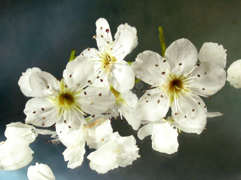 Riflessioni del fiore fotografie stock libere da diritti