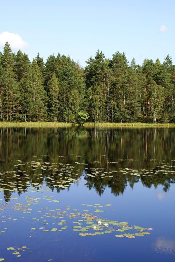 Riflessioni del lago forest immagine stock