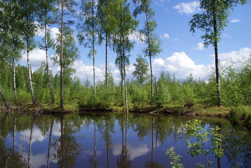 Riflessioni del lago forest di inizio dell'estate immagini stock libere da diritti