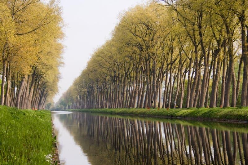 Riflessioni dell'albero del canale di Bruge immagini stock