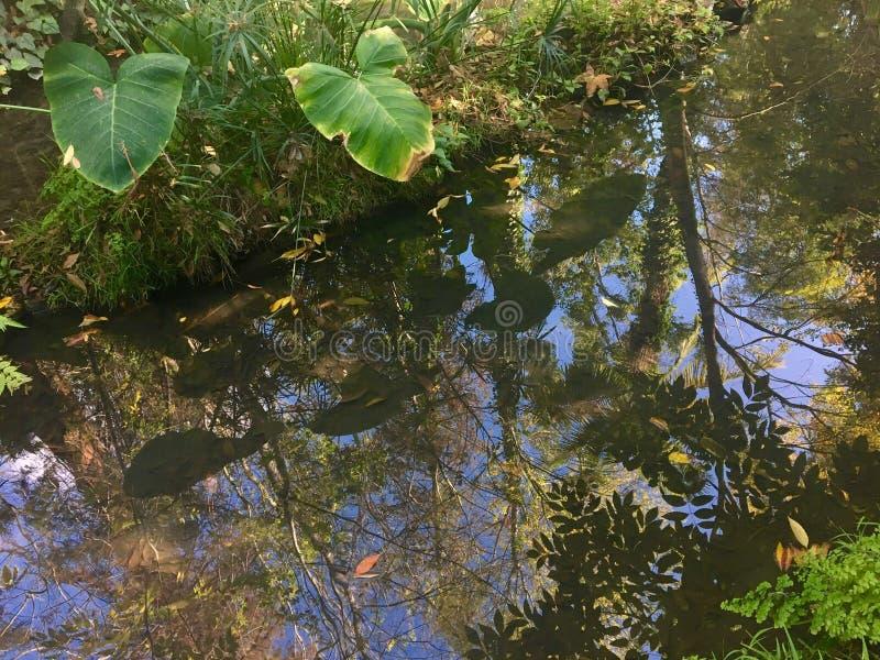 Riflessioni della foresta pluviale in una corrente fotografia stock libera da diritti