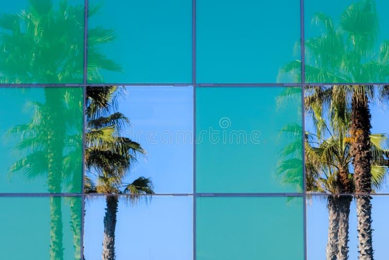 Riflessioni della palma nelle finestre di vetro dell'ufficio fotografia stock libera da diritti