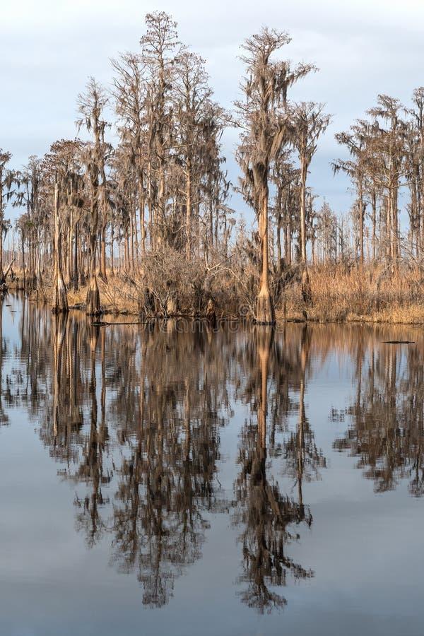 Riflessioni di Cypress su un ramo paludoso di fiume del sud immagine stock libera da diritti