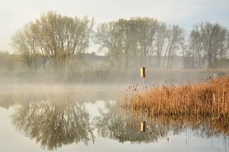 Riflessioni di mattina su uno stagno calmo fotografie stock libere da diritti