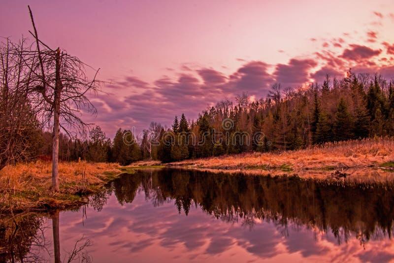 Riflessioni di sera sul fiume in Ontario, Canada del pino fotografia stock libera da diritti