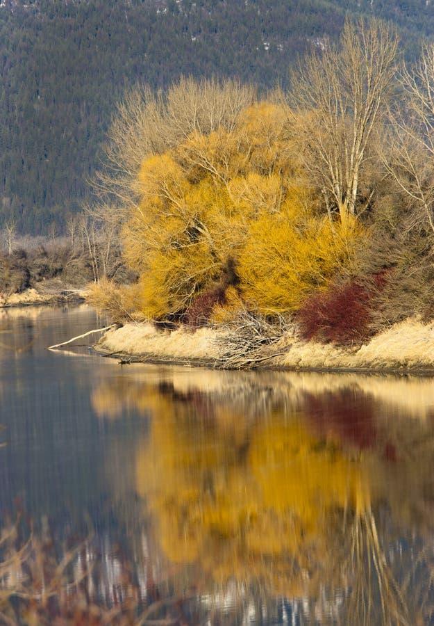 Riflessioni gialle dell'albero. fotografie stock
