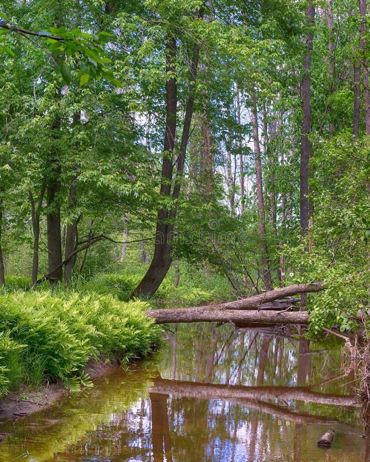 Riflessioni, piccolo Cedar River, Gladwin, MI fotografia stock libera da diritti