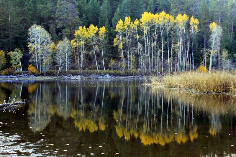 Riflessioni su un lago autumn fotografia stock libera da diritti