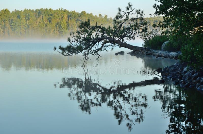 Riflessioni su un lago nebbioso wilderness fotografie stock libere da diritti