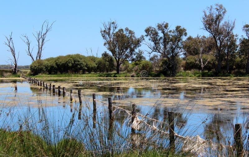 Riflessioni in un lago wetland fotografia stock