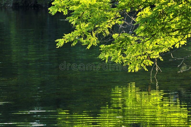 Riflessioni verdi in acqua immagine stock