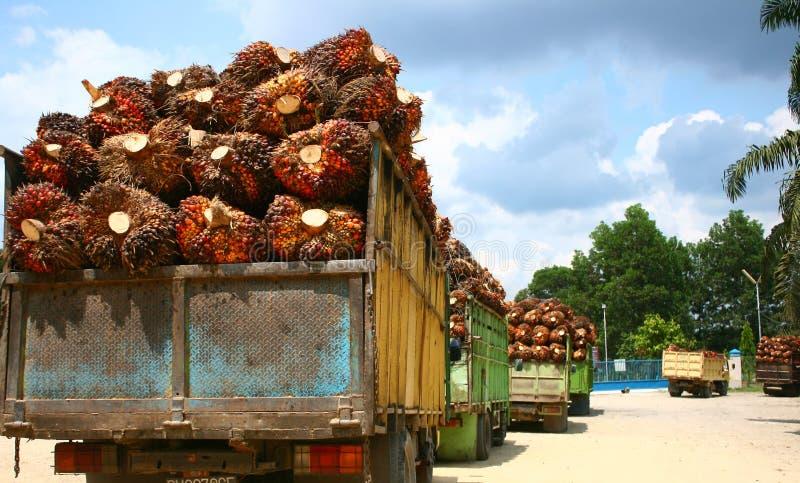 Rifornimento dell'olio di palma immagine stock