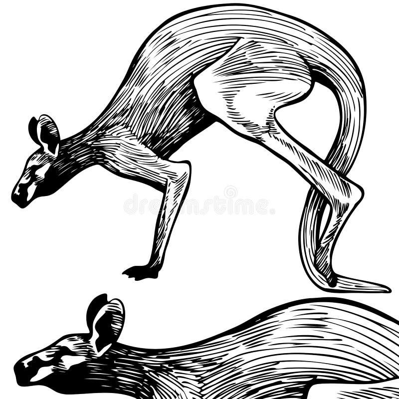 Riga arte del canguro - in bianco e nero fotografie stock