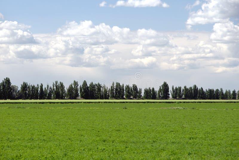 Riga degli alberi fotografia stock libera da diritti