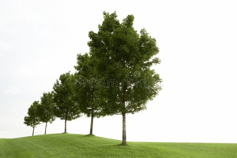 Riga degli alberi verdi fotografia stock libera da diritti